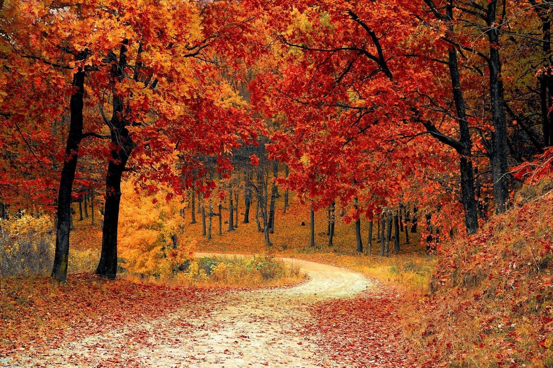 月は清かに空にあり『秋の装い』